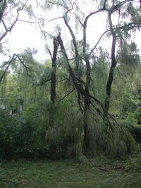 Storm_damage_1_081107