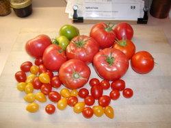 Tomatoes_081707_2