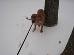 Brixs_first_snow_20071201_2