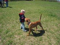 Dog_park_4_20080511