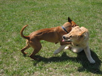 Dog_park_8_20080511