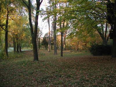 Backyard_in_fall_100206_1