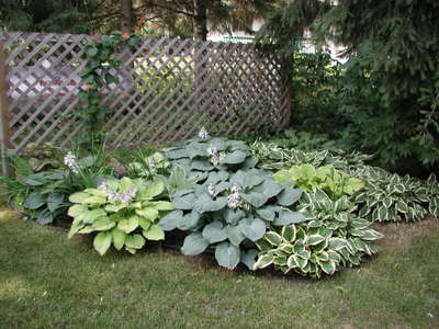 Debbies_hostas_070406