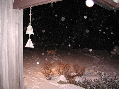 Dexter_in_snow_011407