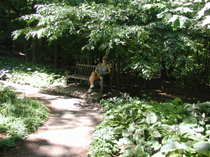 Mn_arb_mom_in_hosta_glade_072306_1