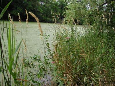 Pond2_071306