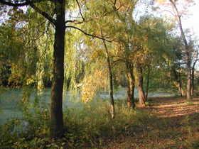 Pond_100206