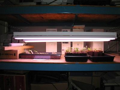 Seedlings_042306