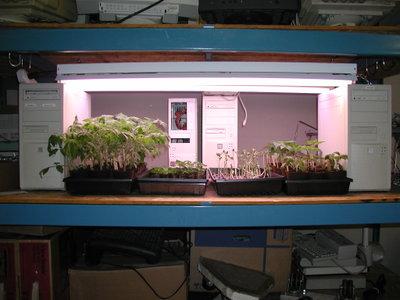 Seedlings_050806