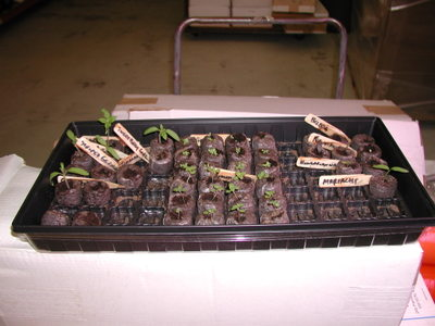 Seedlings_misc_042306