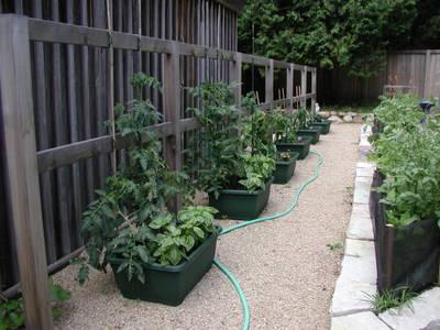 Tomatoes_061806