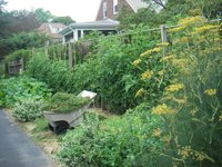 Trellis_idea_from_skippys_garden_blog